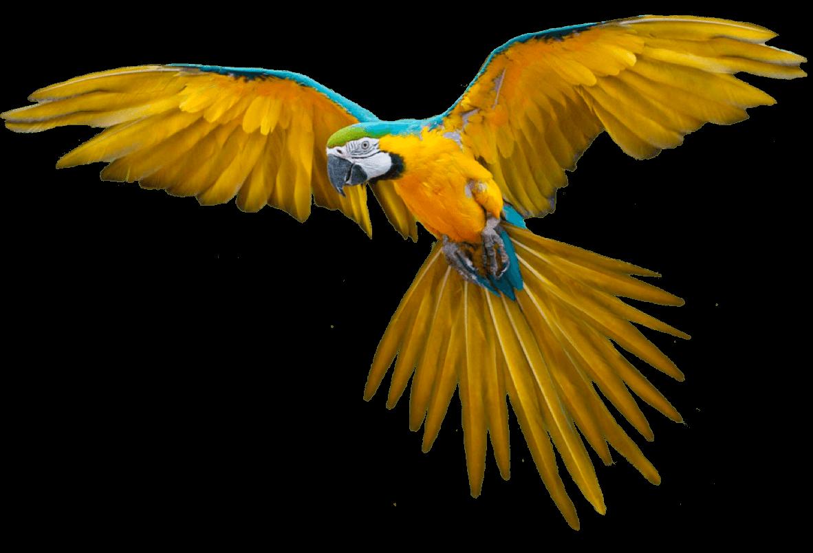 Amsi My Angel Eagle@2x